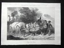 GRAVURE ANCIENNE 19e - ATTELAGE FRANC-COMTOIS