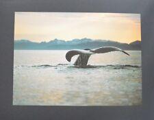 The Image Bank Golden Silence Poster Kunstdruck Bild 40x50cm - Portofrei