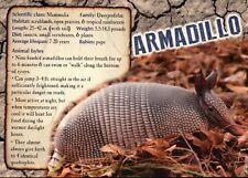 Armadillo, Mammal in Texas Prairie etc., Info - Animal Information Postcard