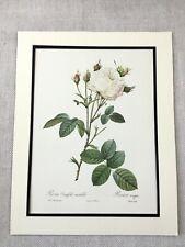 1956 Vintage Botanical Print White Roses Flowers Floral Joseph Redoute LARGE
