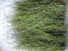 Ma Huang Herbal Tea Ephedra Sinica Tea Pure Raw Natural Tea Premium Chinese Tea