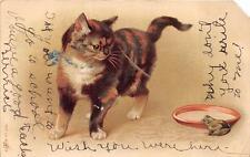 CAT BOWL OF MILK & FROG POSTCARD 1907