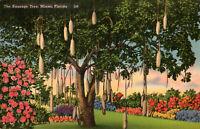 Vintage Postcard The Sausage Tree Miami Florida  *Free Ship*