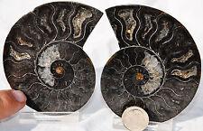 "RARE 1 in 100 BLACK Ammonite Cut Pair Deep Crystals LARGE FOSSIL 84mm 3.3"" n1362"