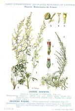Botanique gravure plantes médicinales de France Absinthe 1928 recto verso