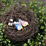 1x Cute Micro Landscape Garden Decor Miniature Fairy Garden Little Bird/Egg/Nest