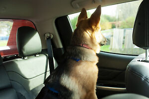 BIG DOG car Safety travel harness quick release washable hygenic comfort webbing