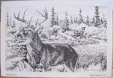 Montana Art Postcard WHITETAIL DEER Leslie Drake-Robinson Drawing Lolo Creek MT