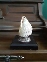Vintage Sea Shell Night Light