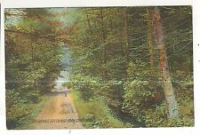 The Ramble, Trail in Caledonia Park CHAMBERSBURG PA Vintage Postcard