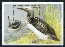 Liberia 1999 MNH Large Birds Arctic Loon 1v S/S Stamps