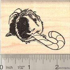 Candy Cane Guinea Pig rubber stamp H11114 WM Christmas