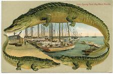Alligator Border Florida 661 Key West Spung (Sponge) Fleet