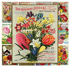 "Mini Posters [13 pgs 8""x11""/A4] Flowers Wildflower Vintage Seed Pocket Ads MP567"