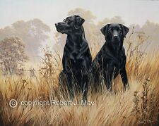 Labrador Retriever limited edition print by Robert May