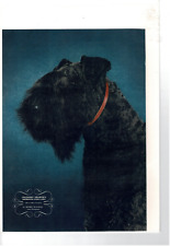 Dec 1942 Esquire Photograph Kerry Blue Terrier Dog From Ireland Ad Print C597