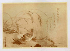 Quail & Rice by Tosa - 1902 Japan Lithograph Nice