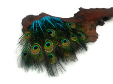 10 Pieces Turquoise Blue Mini Natural Peacock Tail Body Feathers Eyes Halloween
