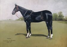 Early 20th Century Oil Panel Portrait of a Champion Show Horse Antique Painting