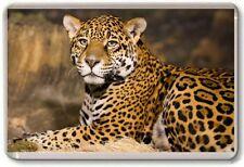 Leopard Fridge Magnet 01