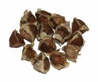 100 Samen Moringa Oleifera  -Super Schnelles Wachstum- Top Qualität