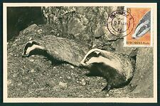 Romania MK 1961 fauna tetto Badger tasso massimo carta MAXIMUM CARD MC cm h1351