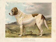EARLY SAINT BERNARD DOG ST. BERNARD  DOGS LITHOGRAPH ANTIQUE PRINT 1881
