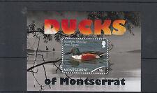 Montserrat 2012 MNH Ducks 1v S/S Birds Northern Shoveler Anas Clypeata