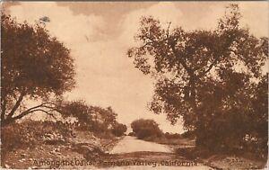 DB postcard 1913, Among the Oaks - Pomona Valley, California