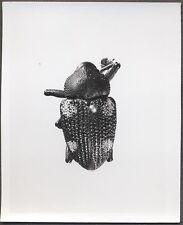 Unusual Vintage Photo Beetle Bug Scientific Specimen Entomology 258122