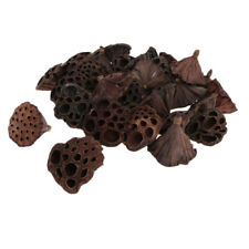 30x Natural Real Dried Lotus Pod For Flower Arrangement Home Floral Decors