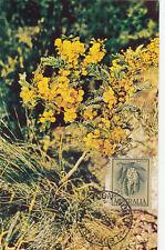 Croydon North NSW Australia wattle flower maximum card with 2/3 stamp value