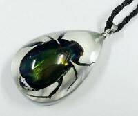Insect Pendant Colorful Scarab Beetle Metallic Shining Specimen - Clear