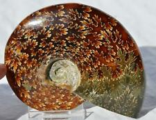 1414 Cut Split WHOLE Ammonite GREAT SUTURE PATTERN 110myo Fossil 102mm LRG 4.0""
