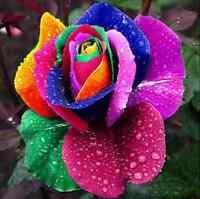 200Pcs Colorful Petals Rose Flower Seeds Home Yard Home Garden Plant Decor Cool