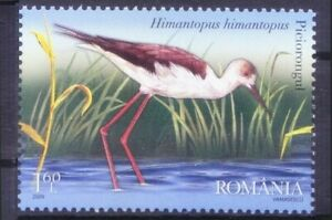 Romania 2009 MNH, Water Birds, Black-winged stilt