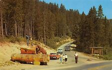 MacDonald Pass Montana~Roadside Exhibit~Bear in Trap Howls~Dog Jumps~1950s Cars