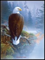 Eagle in the Mist - Chart Counted Cross Stitch Patterns Needlework DIY DMC