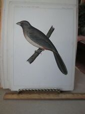 Vintage Print,GRAY BIRD,Pl 30,US RR Exp,Birds