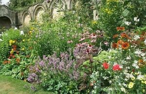 Choose from a range of Perennial Jumbo Plug Plants - FREE DELIVERY over £20