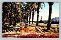 Indio CA, Date Harvest, Scenic Coachella Valley, Chrome California Postcard