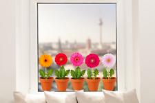 Hochwertige Fenstersticker Gerbera Topf Blume Aufkleber Fensterbild Fensterfolie