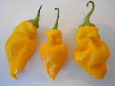 hallazgo-Chile Amarillo 5 Semillas >>> Magnífico Regalo <<<Paprika, de Chili