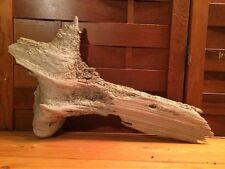 "Beautiful 18"" Driftwood Reptile Terrarium Taxidermy Aquarium Beach Decor"