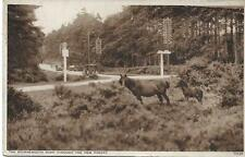 The Bournemouth Rd through New Forest -1952 Used RPPC (Pub:Photochrom) - VGC !