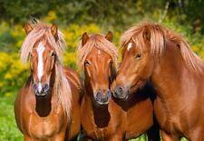Puzzle Castorland 1000 Teile - Horse Friends (61135)