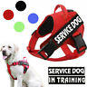 US Service Dog No Pull Harness Pets Puppy Cat Dogs Emotional Reflective dog Vest