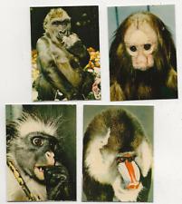 48/496 FOTO KAUFFOTO ZOO FRANKFURT COLOBUS GORILLAKIND UAKARI MANDRILL KIRKS