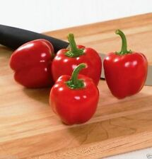 Pepper, Miniature Red Bell (50 Seeds)  Capsicum annuum - Excellent for container