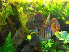 Aquarium 5L Wasserpflanzen - Volldünger f. 30.000 Liter